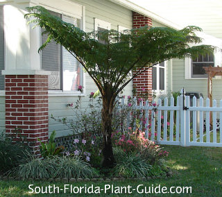 how to use fern tree trunk as planter