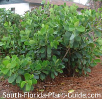 Native Plant Landscaping For South Florida Collection 1