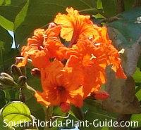 Orange flower cluster