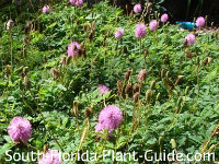 Native Plant Landscaping for South Florida - Collection 1