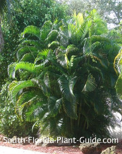 Guide to Florida Landscape Plants for the southern half of ...