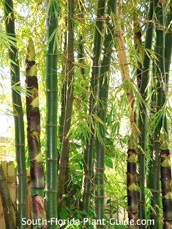 Florida Shade Plants