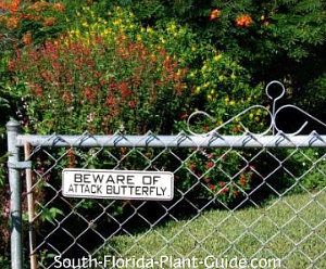 Mixed butterfly plants behind Attack Butterfly sign
