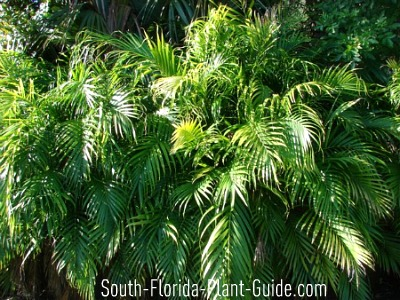 Amazoncom Artificial Plant Decor  Artificial Palm Tree