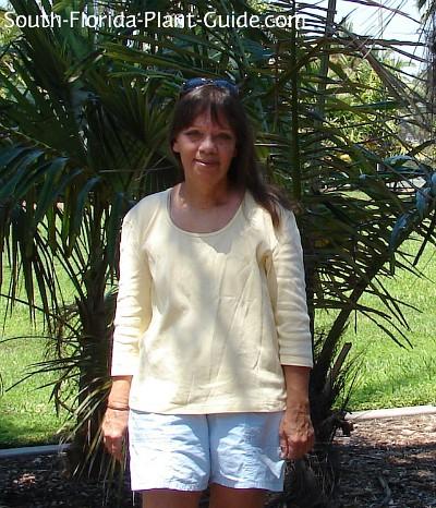 Chase Landre at Gizella Kopsick Palm Arboretum, St. Petersburg, FL