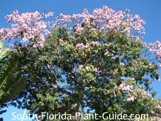 Pink flowers on top of the tree