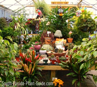 Greenhouse showroom full of plants