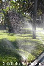 Sprinkler watering a lawn