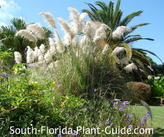 pampas grass in a mixed garden bed