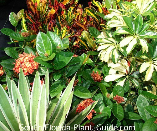 South Florida Landscaping Ideas Landscape In A Box