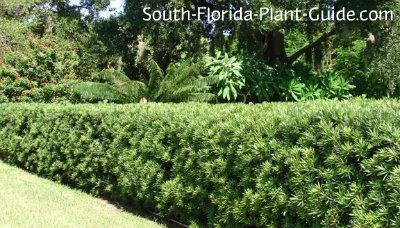 Plantas de sombra de amor que son perfectos para el norte de Texas | Jardinería | Noticias de Dallas