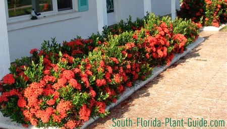 South Florida Plant Guide