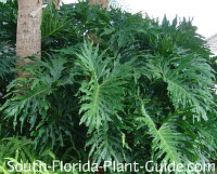 Tropical landscaping for south florida for Low maintenance tropical plants