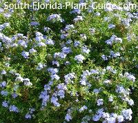 Cottage Garden Landscaping for South Florida