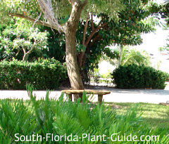 tranquil setting with bench under a tree
