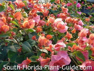 Cold Hardy Landscapes For South Florida