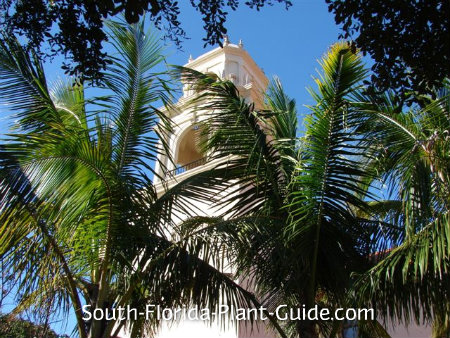 coconut palms frame a Spanish-style church tower