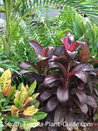 Florida landscape plants cordyline (Ti plant), croton, palm and ferns
