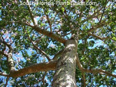 Branch patterns