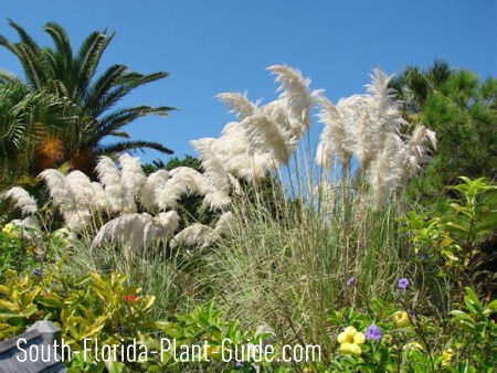Landscape with pampas grass, palms and flowers