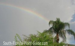 rainy season rainbow