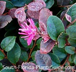 Pink flower and burgundy leaf detail
