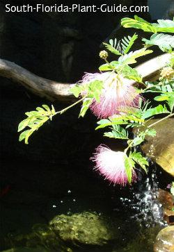 Soft pink blossoms