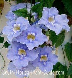 Blue-violet flower detail