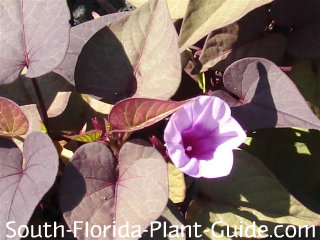 Purple vine with pink flower