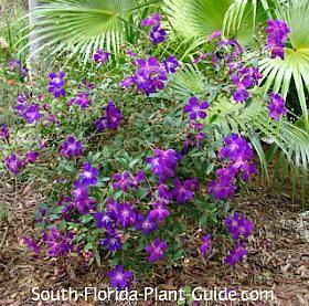 Flowering in a part shade garden