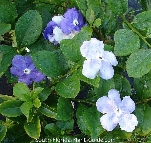 Fleurs d'hier aujourd'hui et demain
